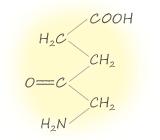 5-Aminolevulinic Acid (5-アミノレブリン酸)